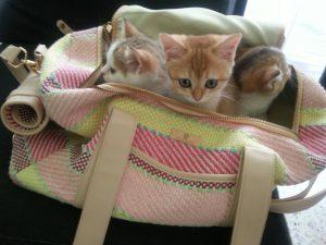 ฉีดวัคซีนสำหรับลูกสุัขและแมว